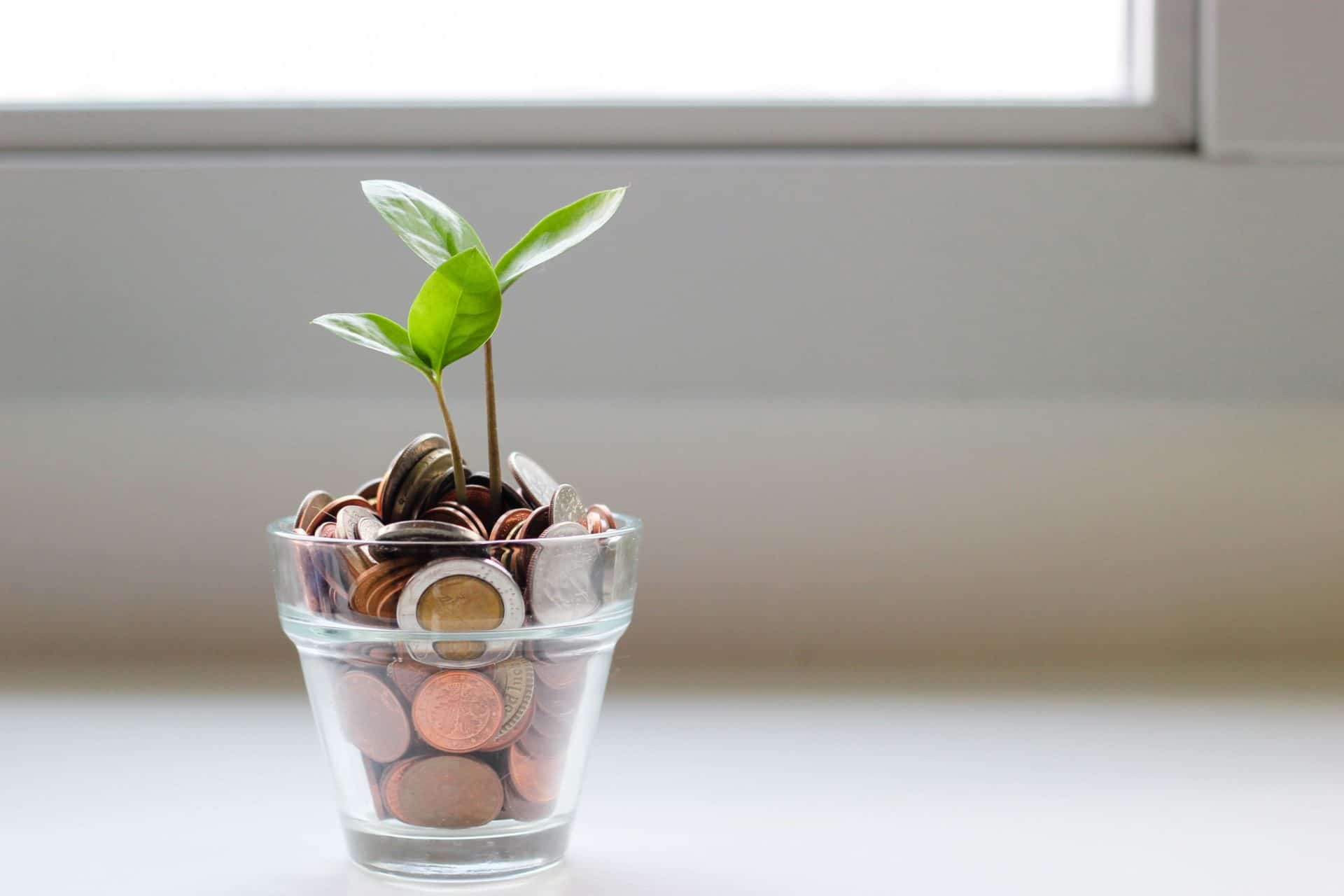 A plant growing from money - Mindset to become rich